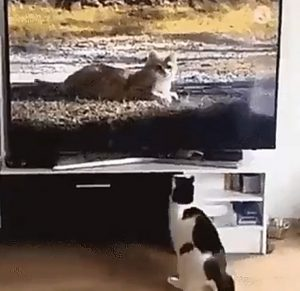 This video proves cats can't distinguish between TV and real life