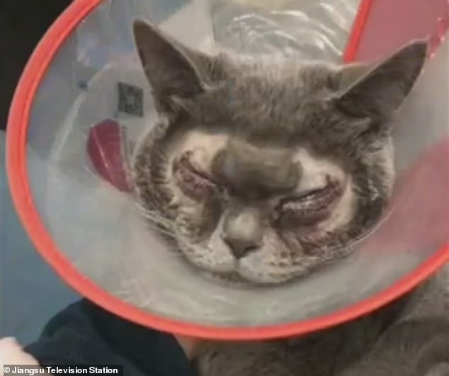 Cosmetic surgery on cat in China