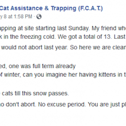 Aborting trapped feral cats