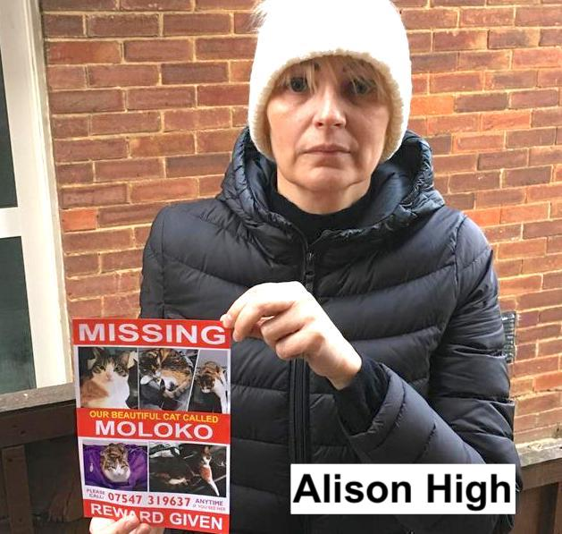 Alison High