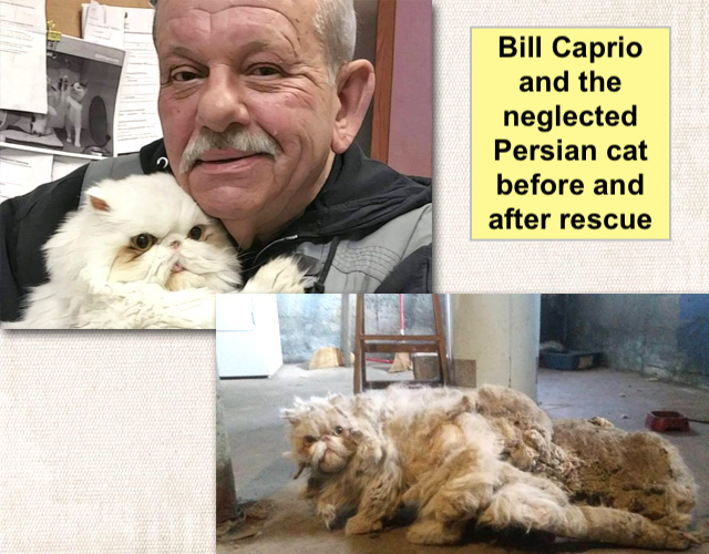 Bill Caprio and the neglected Persian cat before and after rescue