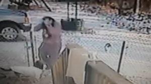 Cat attacks woman viciously
