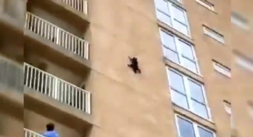 Cat climbs outside of block of flats