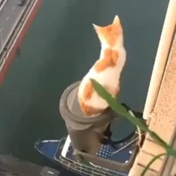 Cat does not have a fear of heights