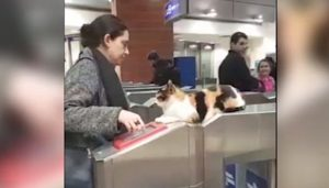 Cat greets commuters at railway station