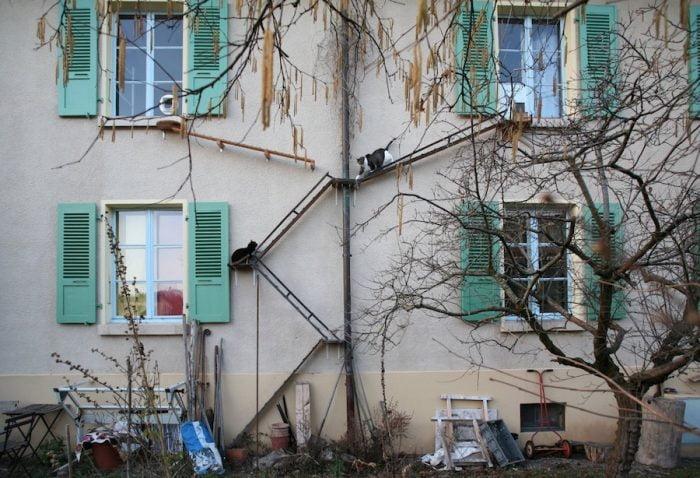 Cat ladders of Switzerland