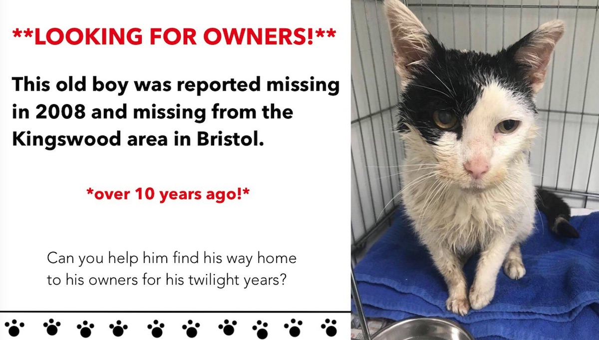 Cat lost ten years ago now found needs to find his owners