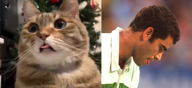 Cat with tongue out and Pete Sampras doing the same thing
