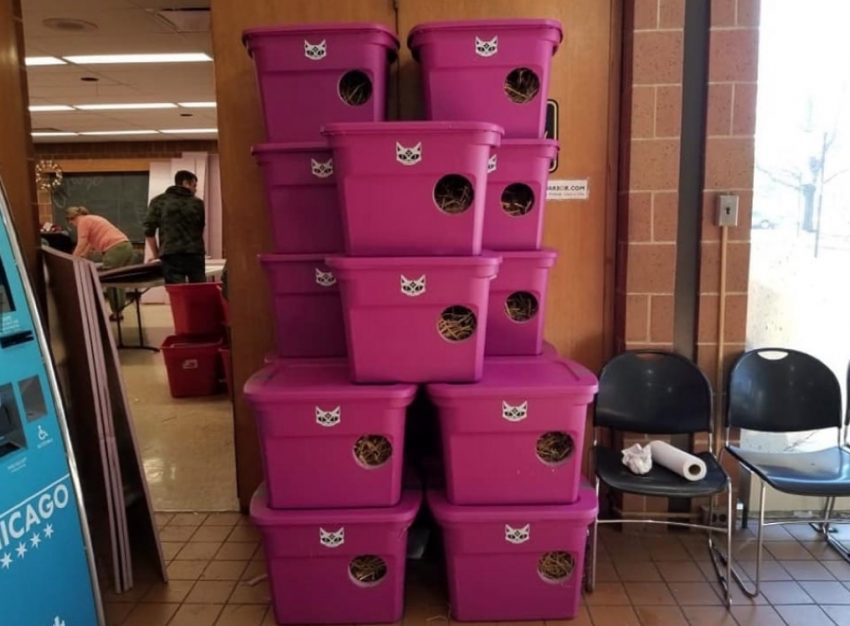 Chicago Community Cats made cat shelters