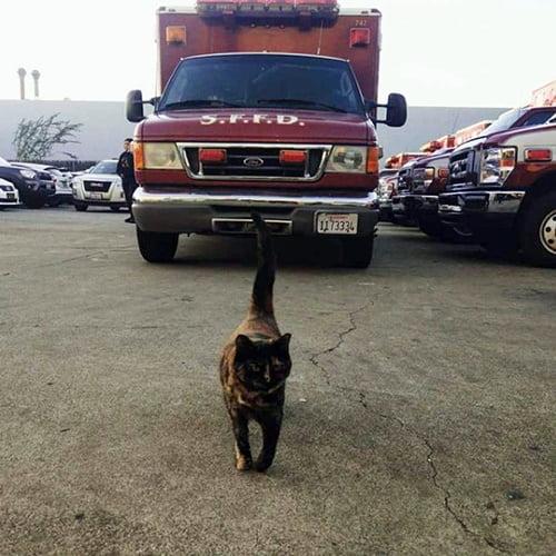 Edna the fire cat
