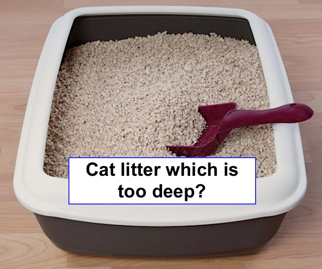 How deep should cat litter be?