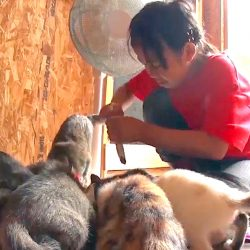 Japanese school student fosters many stray cats