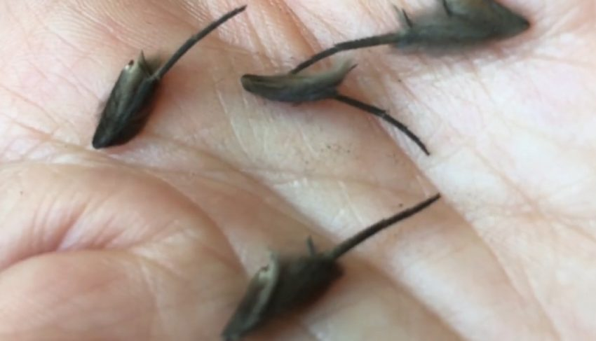 Moth legs