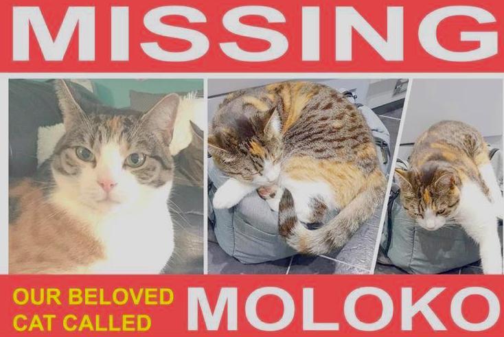 Moloko missing cat poster
