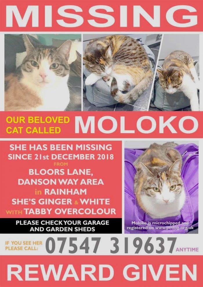 Moloko lost cat poster