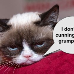 Are domestic cats cunning?