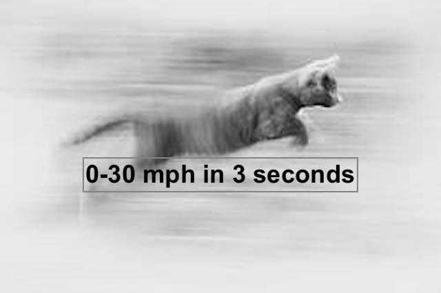 Cat accelerating