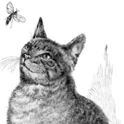 Cat and insect