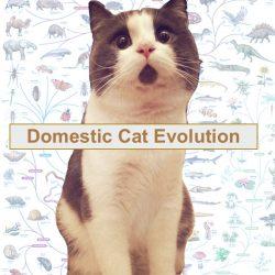 Domestic cat evolution