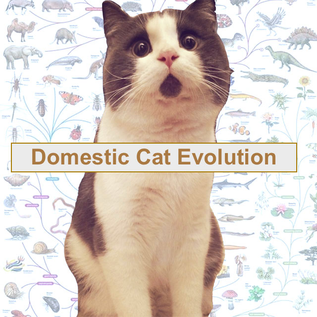 Domestic cat evolution
