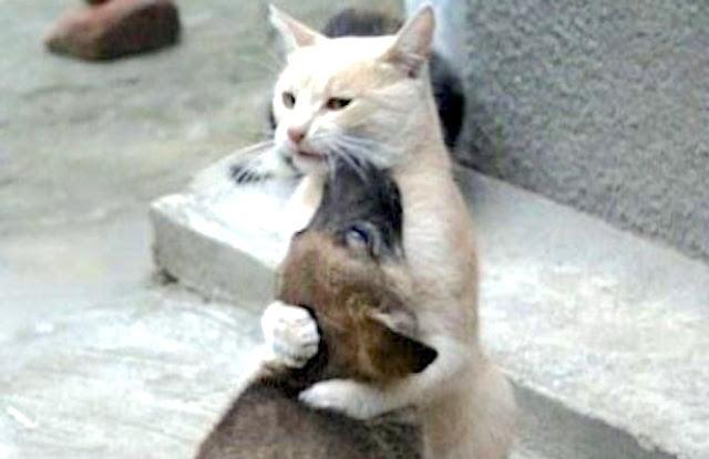 Cat loves dog