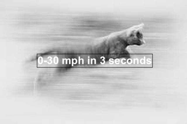 Cat running fast - How fast do cats accelerate?