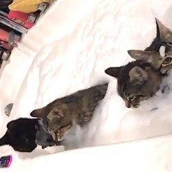 Cats in bath