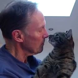 Feline nose touch greeting - cat to human