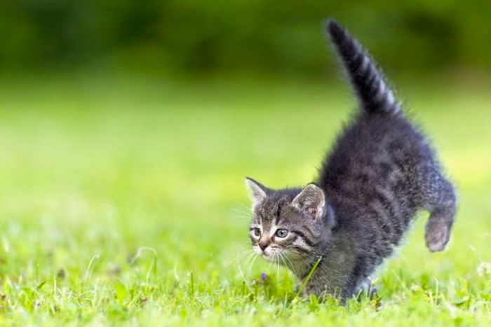Lawn Treatments and cats