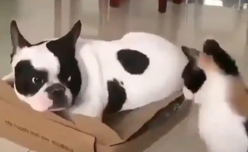 Nope I haven't seen the cat