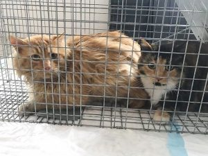 TNR step #1 success: Rare photo of two cats trapped together in a single humane trap