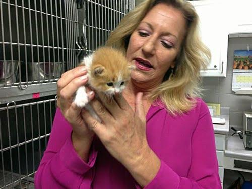 animal shelter director