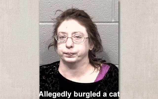 Allegedly burgled cat