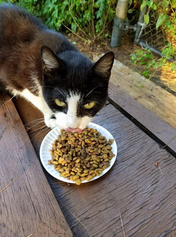 Cat at Birchwood on the Green development in Oakdale