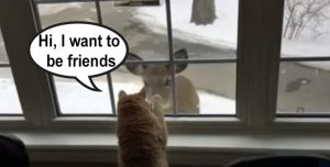 Cat wants to befriend a deer outside the window