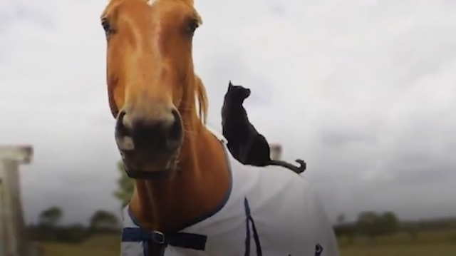 Cat loves to ride his best mate a horse
