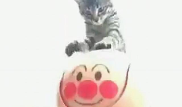 Cat understand flip top bin lid