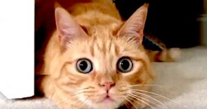 Cat's pupils expland when in hunting mode