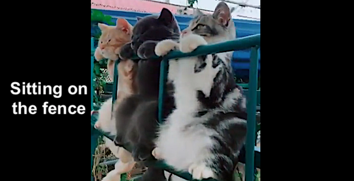 Cats sitting on the fence