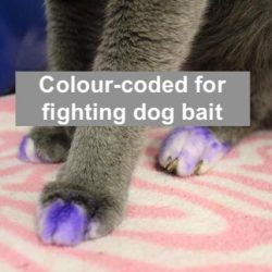 Color-coded cat