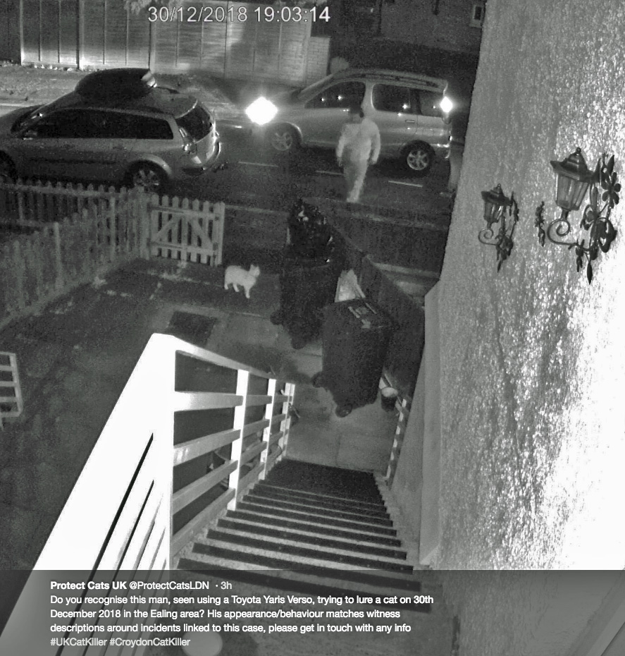 Security camera image of man luring a cat with food at night