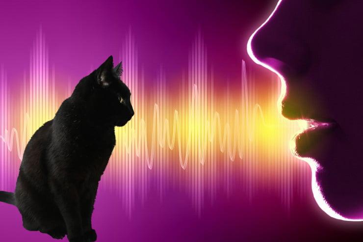 Do cats understand words?