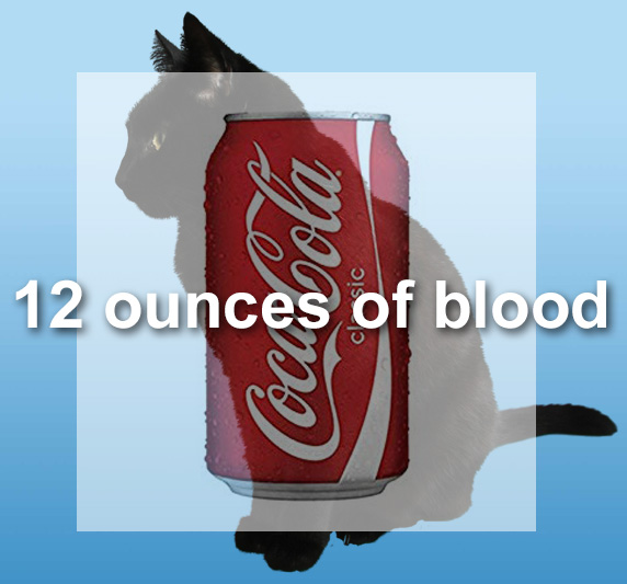 Domestic cat has 12 ounces of blood