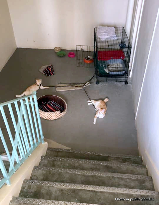 Domestic cats kept on short leash on stairwell all day