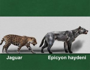 Jaguar and Epicyon comparison