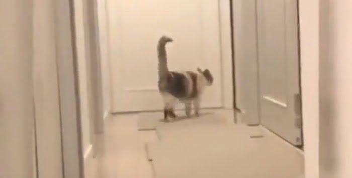 Feline judo