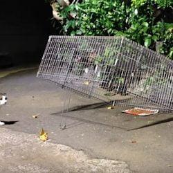 Feral cat drop trap