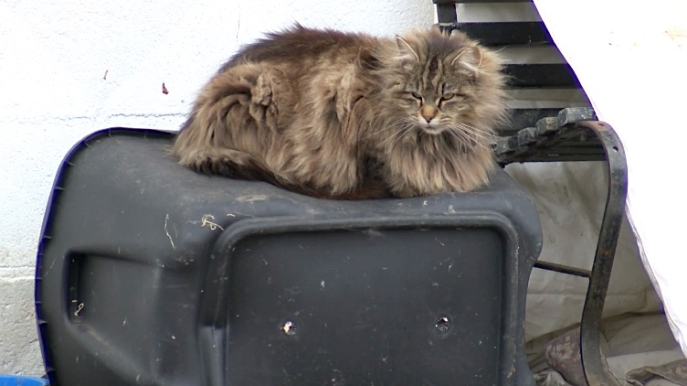 Fined for feeding feral cats. Video screenshot from wbng.com.