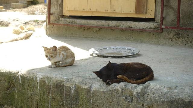 Ghana community cats