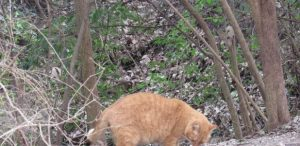 Cat in South Park Copperas Cove